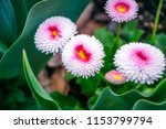 closeup of some bright spring... | Shutterstock . vector #1153799794