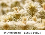 tiny hairs in spot focus of... | Shutterstock . vector #1153814827