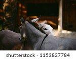 african wild ass  african wild... | Shutterstock . vector #1153827784