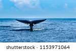 a tale of a whale beautifully... | Shutterstock . vector #1153971064