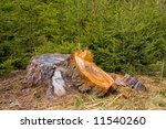 Tree Stump And Fresh Young Trees