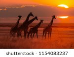 moody sunset in african savanna ... | Shutterstock . vector #1154083237