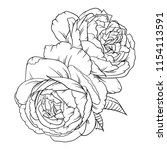 line drawing vector rose pattern | Shutterstock .eps vector #1154113591