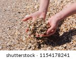 close up of shellfish seaside...   Shutterstock . vector #1154178241