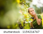 woman picking grape during wine ... | Shutterstock . vector #1154216767