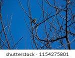 tiny  little  silvereye or wax... | Shutterstock . vector #1154275801
