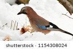 jay bird during winter time | Shutterstock . vector #1154308024
