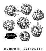 raspberry vector drawing....   Shutterstock .eps vector #1154341654
