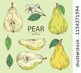 collection of pear  fruit ... | Shutterstock .eps vector #1154371594