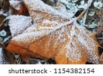 frosted autumn leaf. | Shutterstock . vector #1154382154