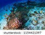 a discarded ghost fishing net... | Shutterstock . vector #1154421397