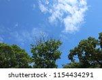 blue sky  clouds. treetops. | Shutterstock . vector #1154434291