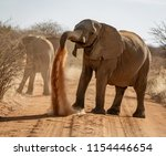 Small photo of Elephant throws dirt onto its back in order thwart parasites