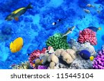 coral and fish in the red sea... | Shutterstock . vector #115445104