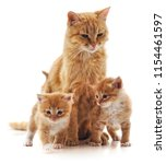 Stock photo cat with kittens isolated on a white background 1154461597