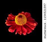 still life fine art floral...   Shutterstock . vector #1154521597