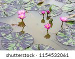 a beautifully bloomed lily | Shutterstock . vector #1154532061