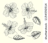 Vector Vintage Set Of Tropical...
