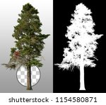 pine. tree isolated on... | Shutterstock . vector #1154580871