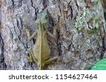 lizard lays on a tree in the... | Shutterstock . vector #1154627464