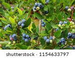 blueberries plant with fruits... | Shutterstock . vector #1154633797