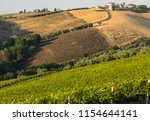 panoramic view of olive groves  ... | Shutterstock . vector #1154644141