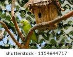 the gouldian finch  erythrura... | Shutterstock . vector #1154644717