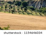 panoramic view of olive groves... | Shutterstock . vector #1154646034