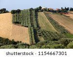 panoramic view of olive groves... | Shutterstock . vector #1154667301