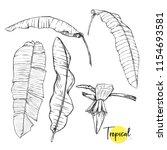 banana palm leaves. tropical... | Shutterstock .eps vector #1154693581
