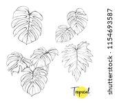 monstera leaves. tropical plant.... | Shutterstock .eps vector #1154693587