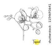 white orchid flower. tropical... | Shutterstock .eps vector #1154693641
