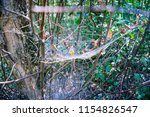 a web around a tree in the... | Shutterstock . vector #1154826547