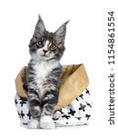 Super Cute Blue Tabby With...