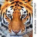 beautiful close up portrait of... | Shutterstock . vector #1154867707