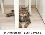 Stock photo cat gray mongrel home lies on a wooden gray floor on the background of white wooden furniture on 1154959651