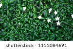 beautiful white flowers  on...   Shutterstock . vector #1155084691