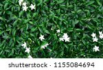 beautiful white flowers  on...   Shutterstock . vector #1155084694