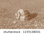 seashell lying at seashore in... | Shutterstock . vector #1155138031