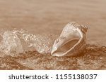 view on seashell at seaside in... | Shutterstock . vector #1155138037