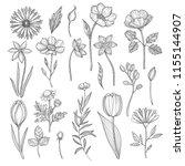 hand drawn plants. vector... | Shutterstock .eps vector #1155144907