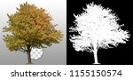 yellow tree in fall isolated on ... | Shutterstock . vector #1155150574