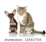 Stock photo puppy with a cat attentively look in the camera isolated on white background 115517725