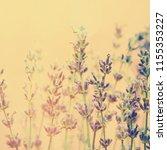 lavender field in sunlight.   Shutterstock . vector #1155353227