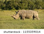 white rhino in late afternoon... | Shutterstock . vector #1155359014