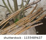 common reed stems  photographed ... | Shutterstock . vector #1155489637