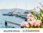 yachts in tivat bay. palms... | Shutterstock . vector #1155604504