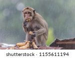 monkey or ape is the common... | Shutterstock . vector #1155611194