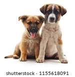 two cute puppies isolated on a... | Shutterstock . vector #1155618091