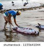 puerto lopez  ecuador   aug 19  ... | Shutterstock . vector #1155641044